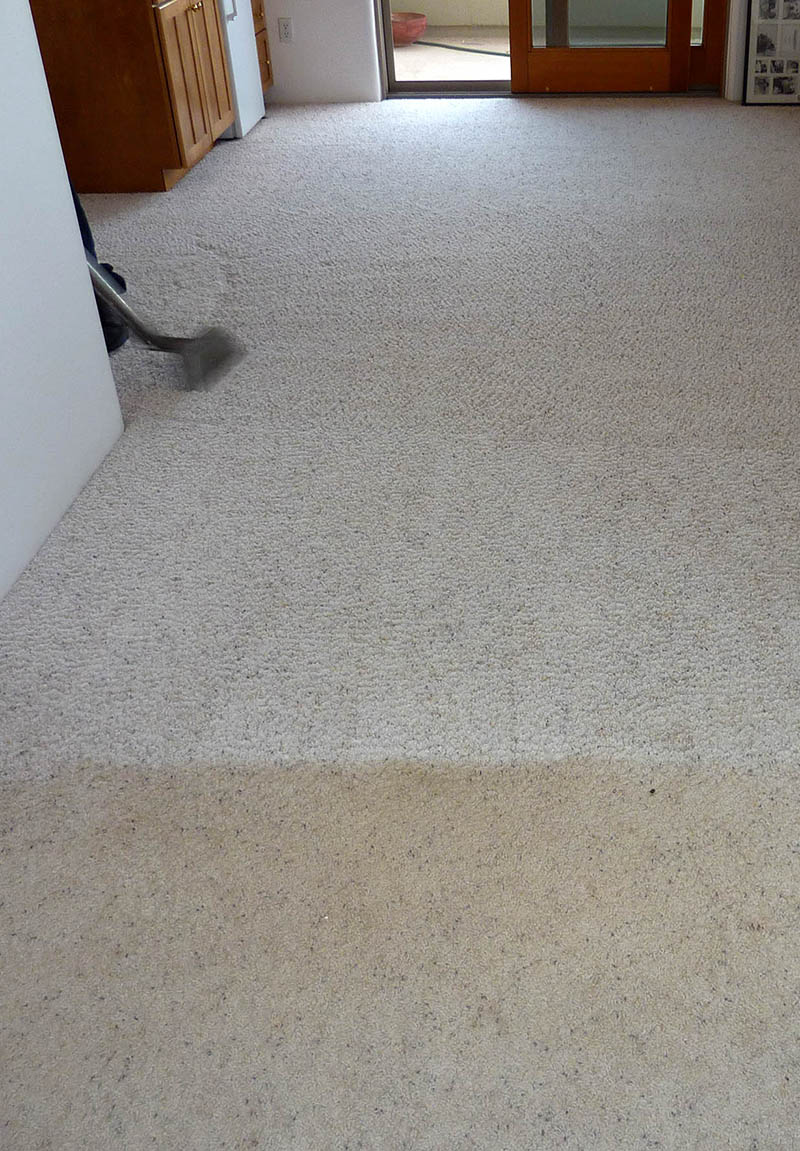 Carefree Floors Services - Cleaning Carpet